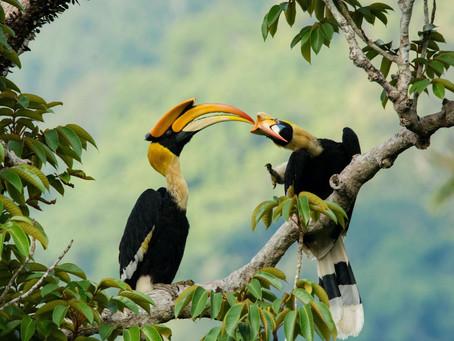 Beak2Beak: Affection among winged wildlings