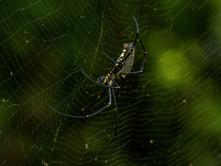 Why Don't Spiders Get Trapped in Their Own Web?