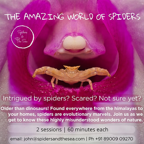 Poster 2 spiders_L.jpg