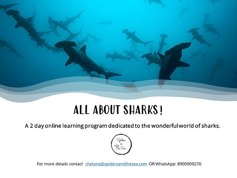 All about sharks poster for website.jpg