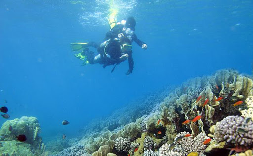 snorkel 4