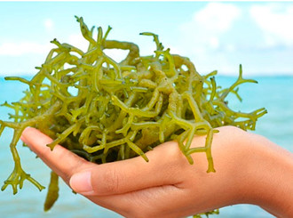 Las algas no son solo un producto de moda