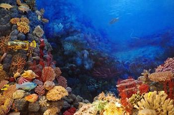¿Por qué comprar un protector respetuoso con el mar?