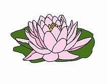 nenufar-naturaleza-flores-11803107.jpeg