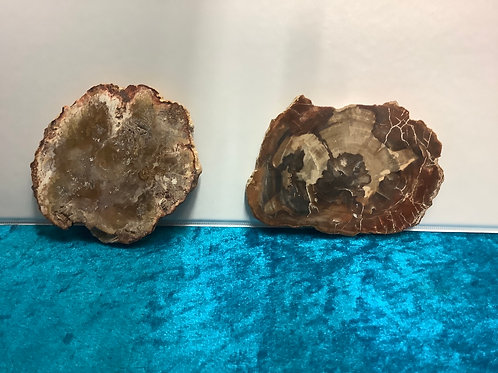 Fossilwood plate