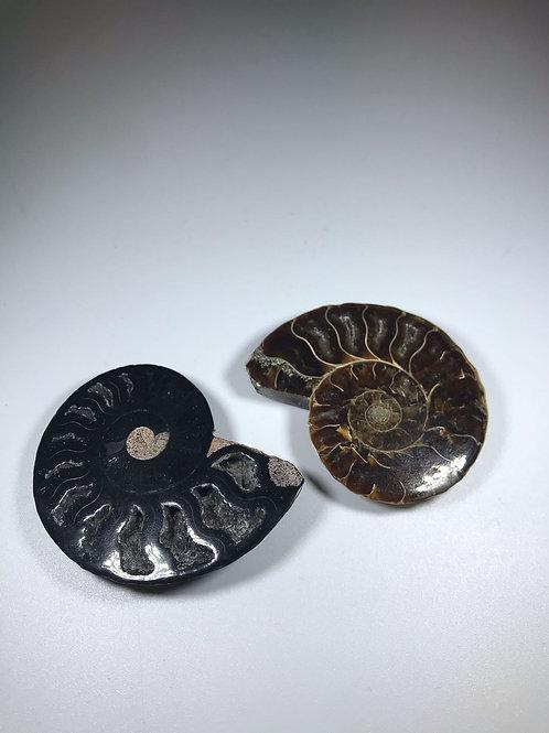 Half polished ammonite
