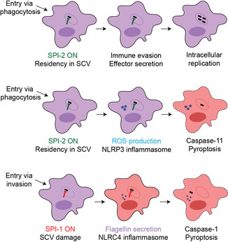 Bacterial virulence across a shifting host landscape