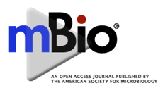 News from the Bench: Salmonella evades killing by neutrophils