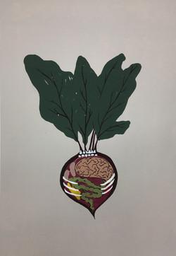 anatomy of beet