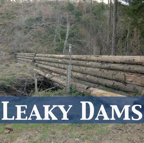 Leaky Dams