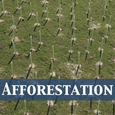Afforestation