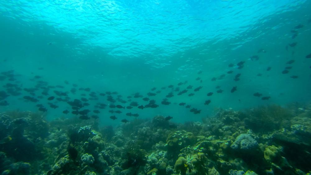 A quiet dive off Hoga island.