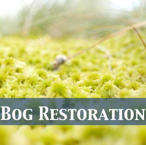 Bog Restoration
