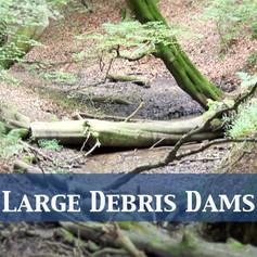Large Debris Dams