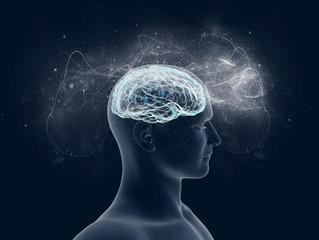 Neuro Marketing: troppe scelte inceppano i meccanismi decisionali del cervello