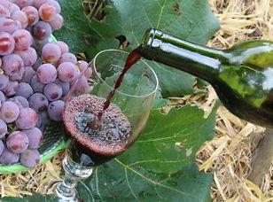 turismo-vinho-370x260.jpg