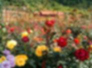 roseiral.jpg