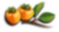 persimmons-1992072_960_720.png