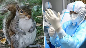 After Squirrel In Colorado Tests Positive For Bubonic Plague, Health Dept Warns Public
