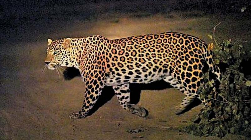 Student attacked by a leopard while attending the online class