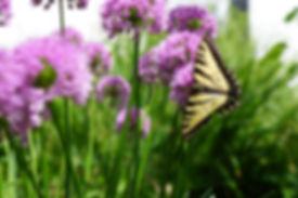 section_flower.jpg