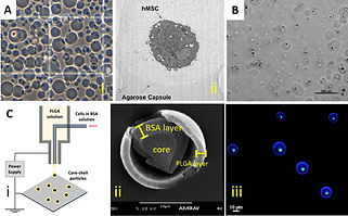 Cell armor for protection against environmental stress: Advances, challenges and applications in micro- and nanoencapsulation of mammalian cells