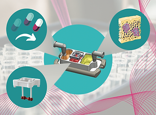 Integrated human organ-on-a-chip model for predictive studies of anti-tumor drug efficacy and cardiac safety