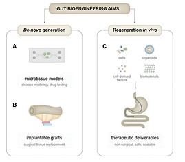 Gut bioengineering strategies for regenerative medicine