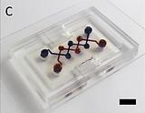 Silk hydrogel microfluidic systems