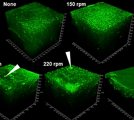 Matrix Deformation with Ectopic Cells Induced by Rotational Motion in Bioengineered Neural Tissues
