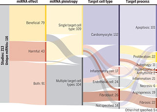 Cell type–specific microRNA therapies for myocardial infarction