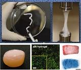 Physically-crosslinked Silk Hydrogels
