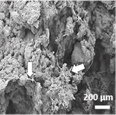 Rheological characterization, compression, and injection molding of hydroxyapatite-silk fibroin composites