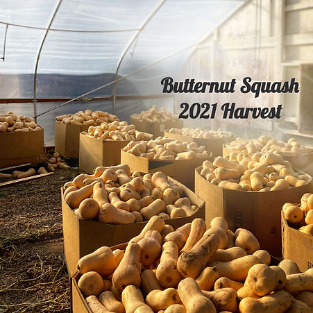 Butternut Squash 2021 1_edited.jpg