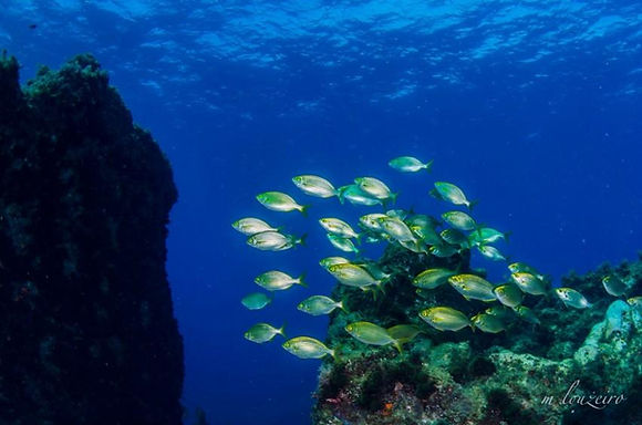 Diving_in_Portugal_Madeira_Santa_Cruz_Ga
