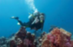 algarve-underwater-is-beautiful-come-and