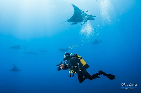 Diving_the_Azores_Baixa_do_Ambrosio_drea