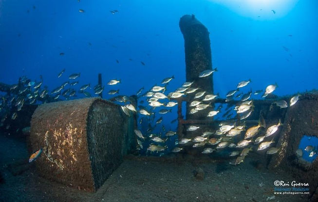 Diving_in_Madeira_Portugal_the_Bowbelle_