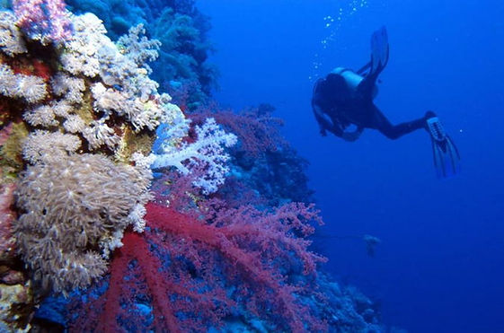 experience-diving-in-portugal-one-dive-s