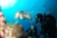 diving-in-algarve-dive-portimao-portugal