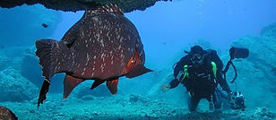 Madeira-diving-in-Portugal-tremendous-di