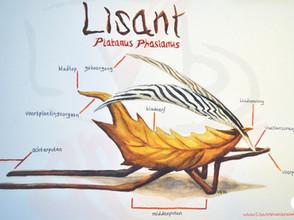Lisant Platanus Phasianus