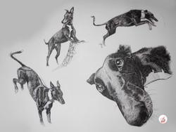 Animals exposed