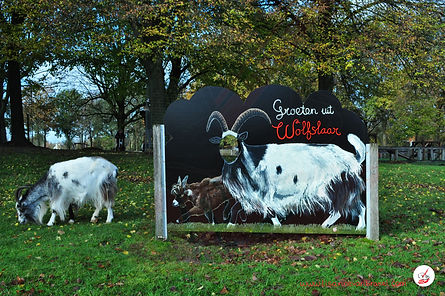Cut-Out Photo Board Land Goats (with mod