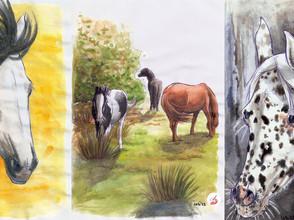Equine Drawings by Memory (no. 9, no. 42, no. 48)
