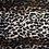 Thumbnail: Persian Leopard