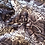 Thumbnail: Burmese Python