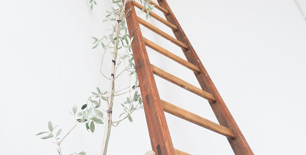 Vintage Belgian Ladder