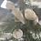 Thumbnail: Christmas Robin