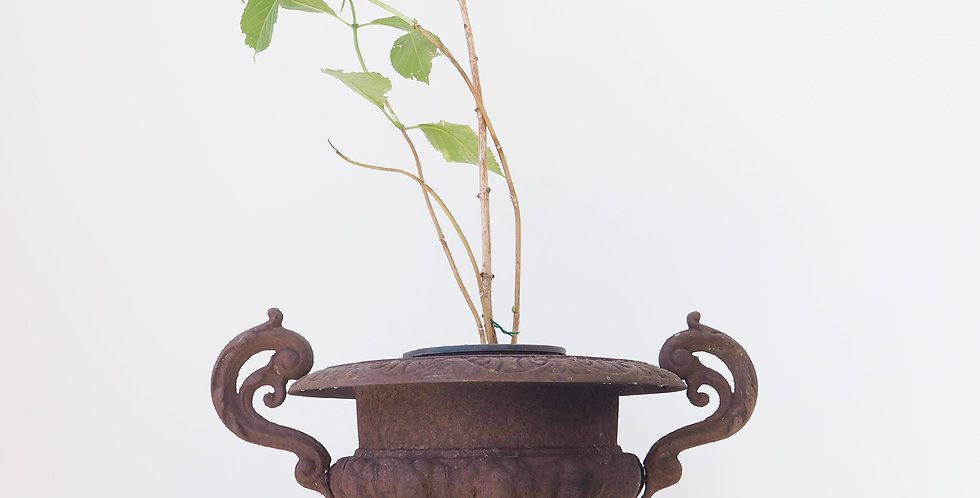 French Cast Iron Urn with Handles